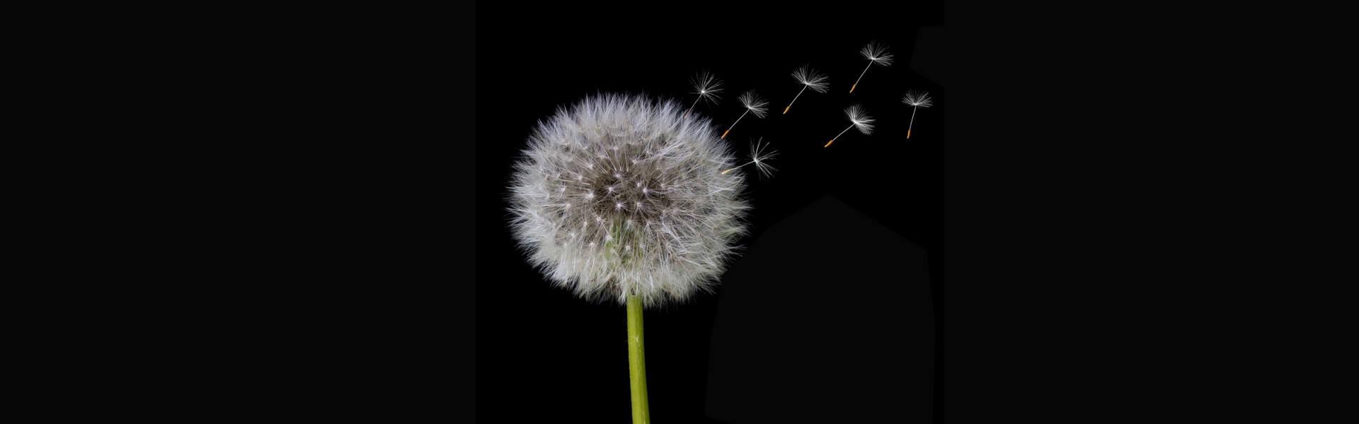 5 Ways to Survive Allergy Season Naturally