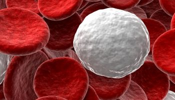 Everything you need to Know about White Blood Cells